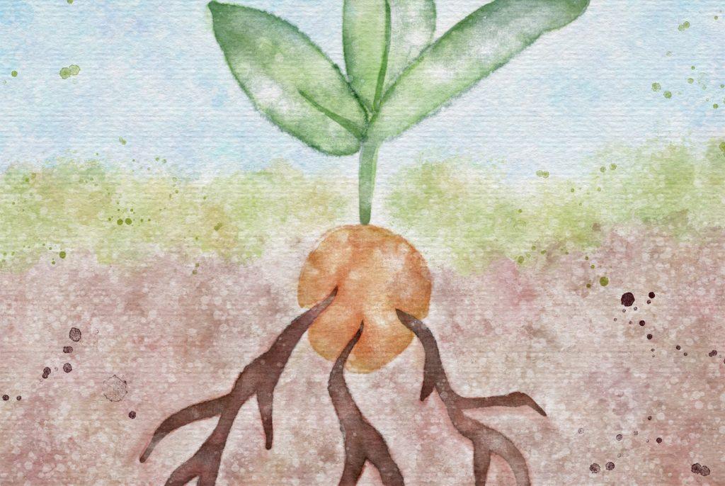 Grow Your Social Enterprise